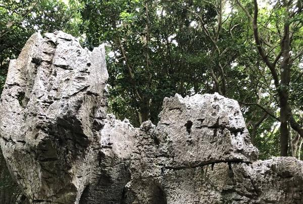大石林山の写真・動画_image_697743