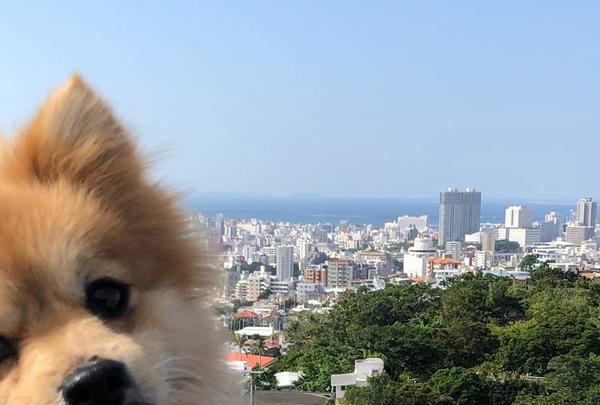 首里城の写真・動画_image_698060