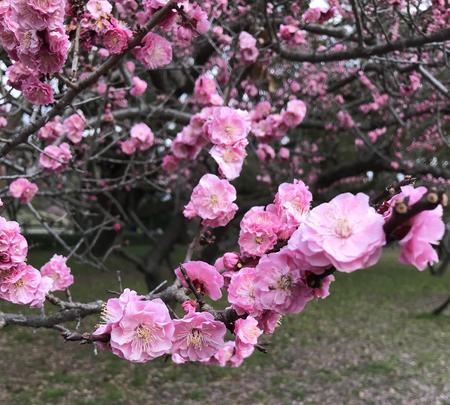 京都御苑の写真・動画_image_744867