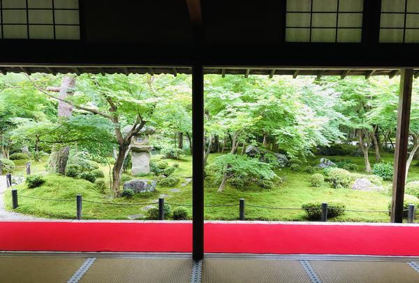 圓光寺の写真・動画_image_784208