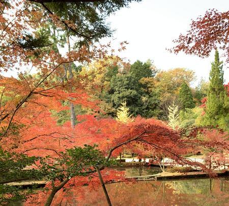 曽木公園の写真・動画_image_838374