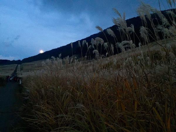 夜のすすき野原