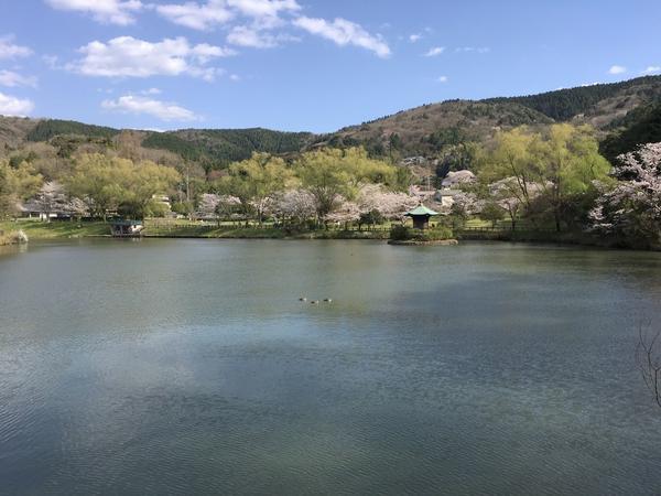 桜の時期はこんなに綺麗なんですよ
