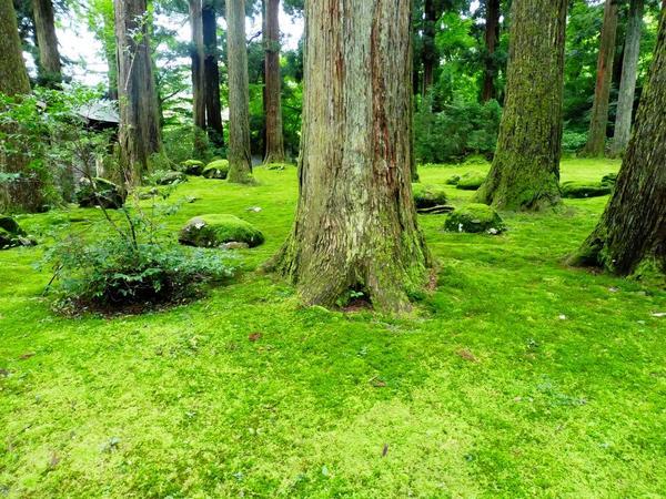 とにかく苔が美しいです…!