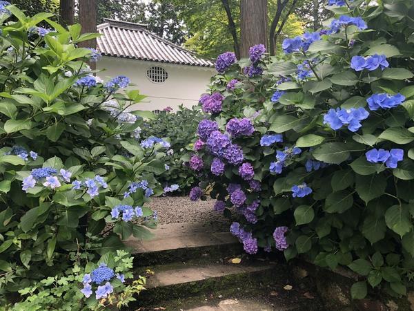 これぞ初夏の京都☂️
