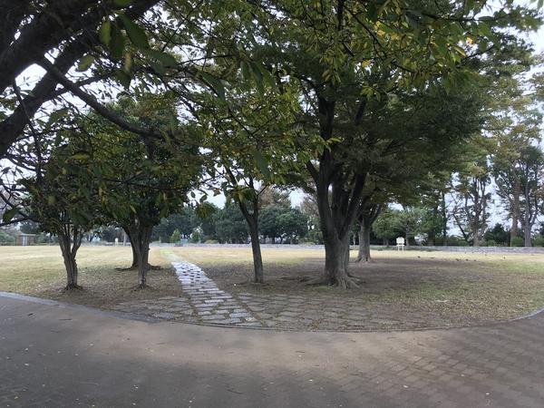 芝生の中に一直線の歩道が