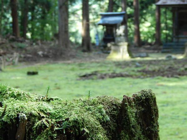 苔が一層静寂を誘います
