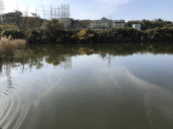 駒岡池はこんなんです。