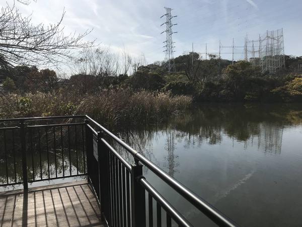 池は深そうです。