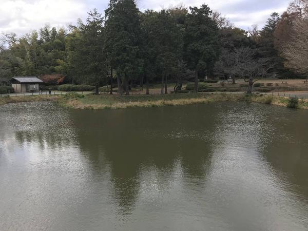 結構広い池です。