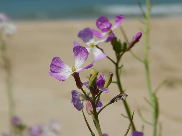浜風にゆれる可憐な花