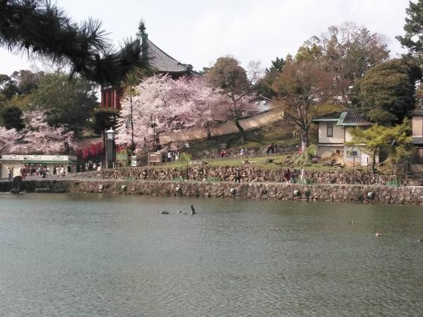 放生会のために造られた池