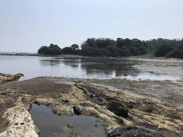 江奈湾干潟