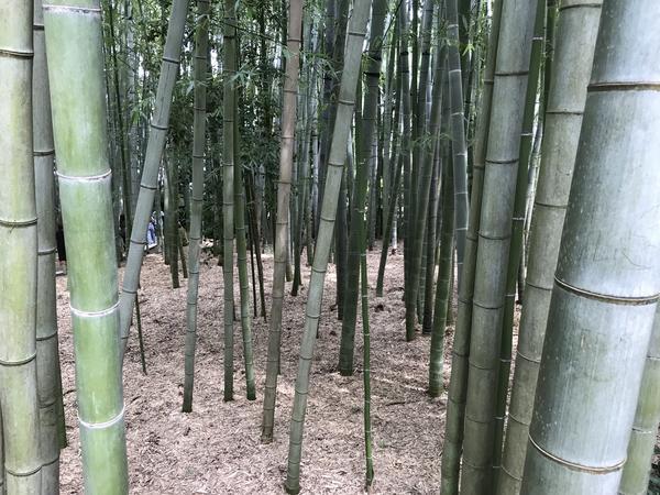 鬱蒼とした竹林