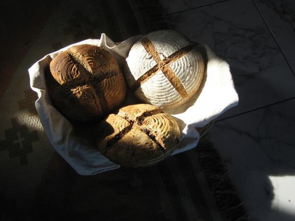 シンボルパン:自家栽培古代小麦(スペルト)のカンパーニュ