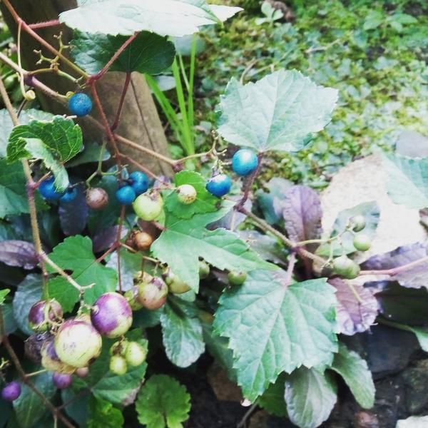 見所は、季節の植物