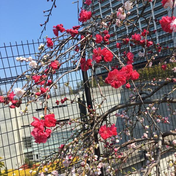 お花もきれい