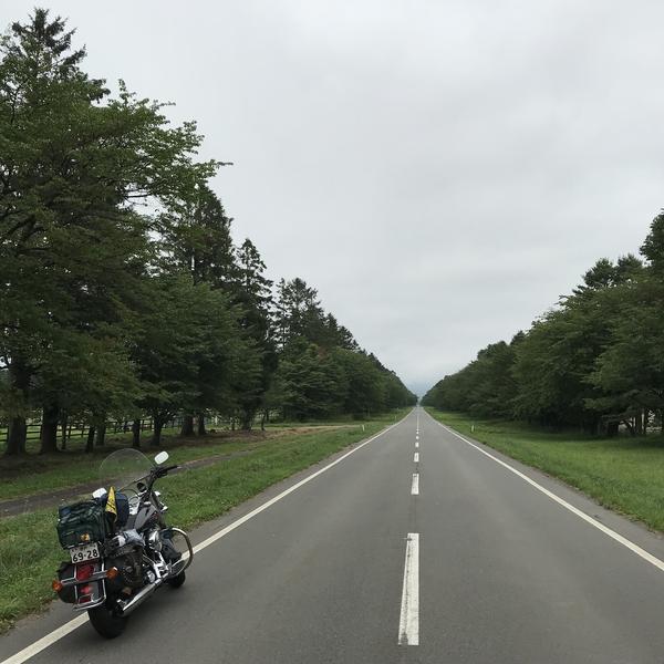二十間道路 桜並木