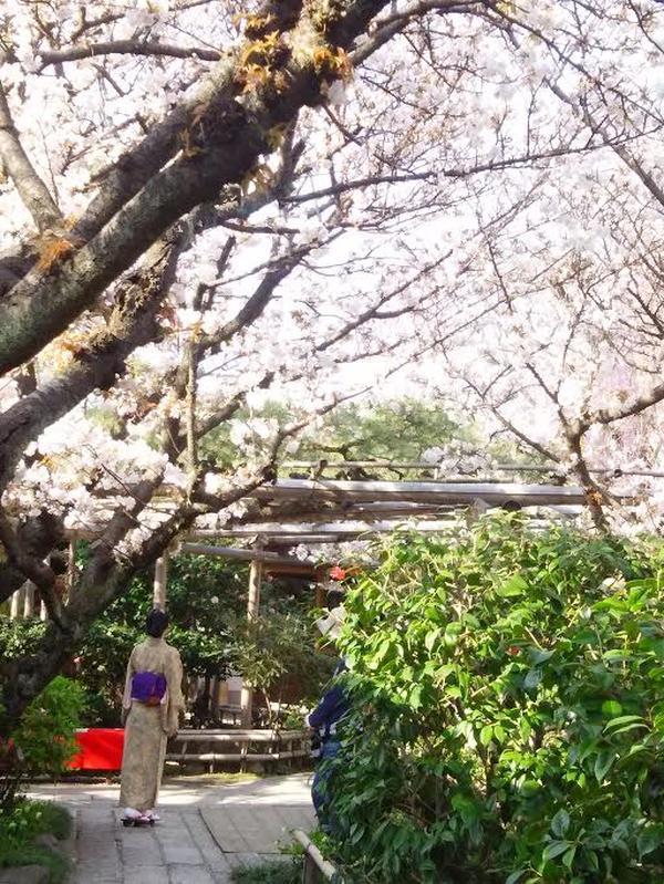 京都の春、満喫