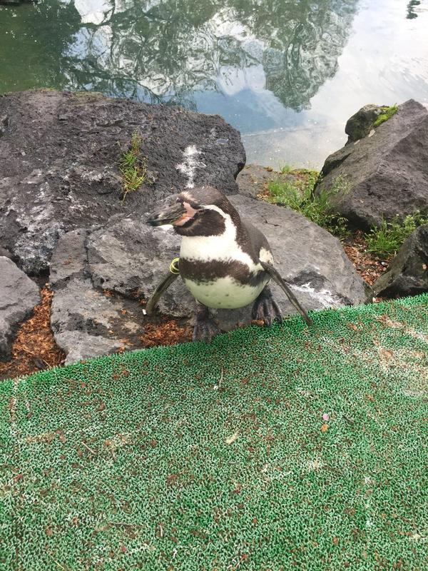 ペンギンの滝