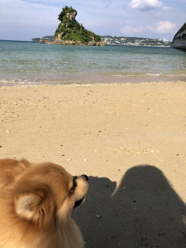 砂浜に降りれます