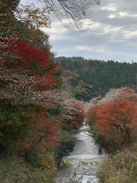 川沿いは特に綺麗です。