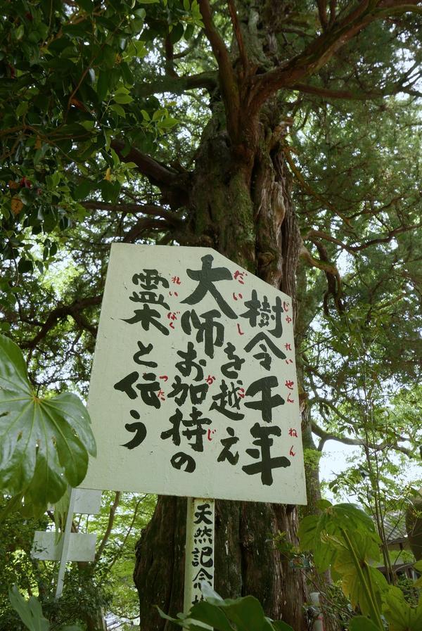樹齢千年の霊木