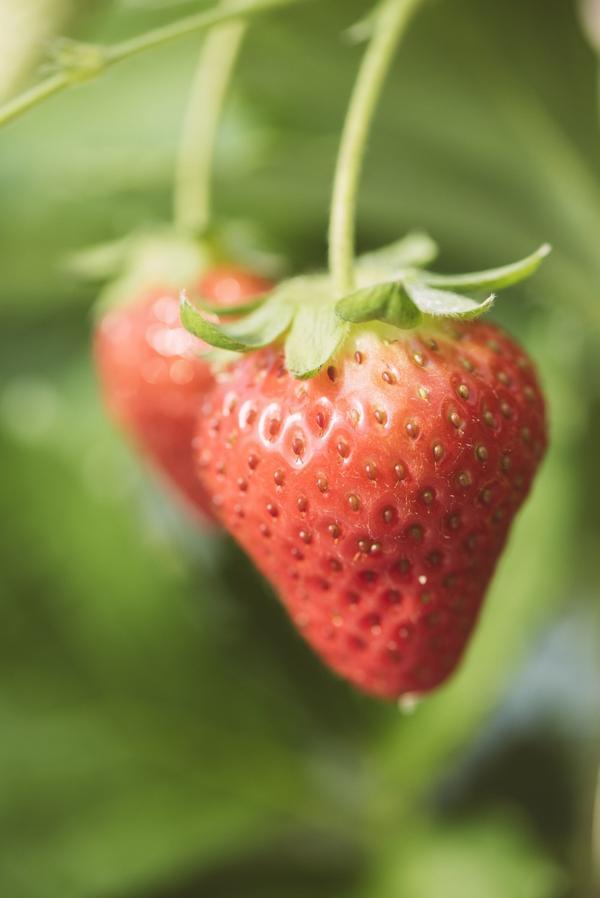完熟苺の甘い香り。