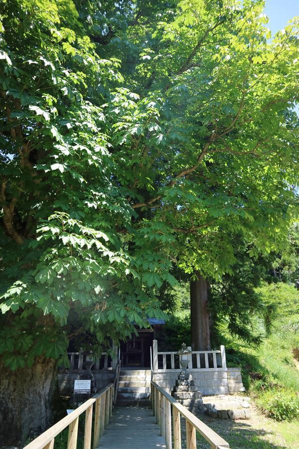 木製の柵の参道