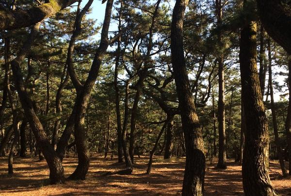 虹の松原の写真・動画_image_56401