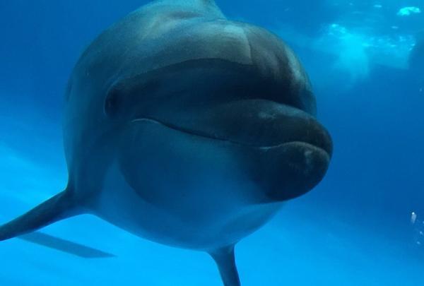 イルカが近くに来てくれる!
