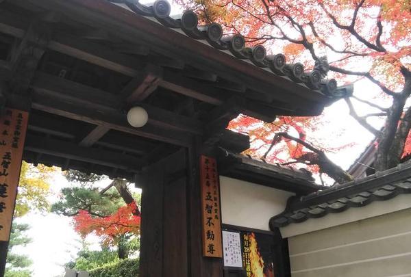 蓮華寺の写真・動画_image_464656