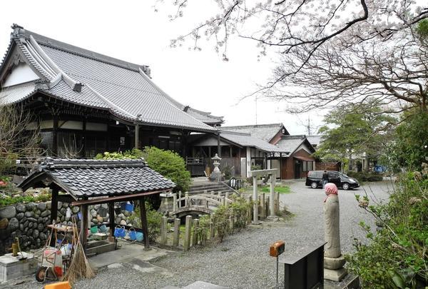 明台寺の境内は桜吹雪