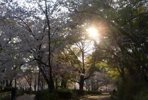 太陽の光を浴びながら