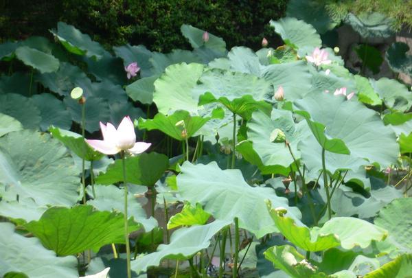 四天王寺庭園