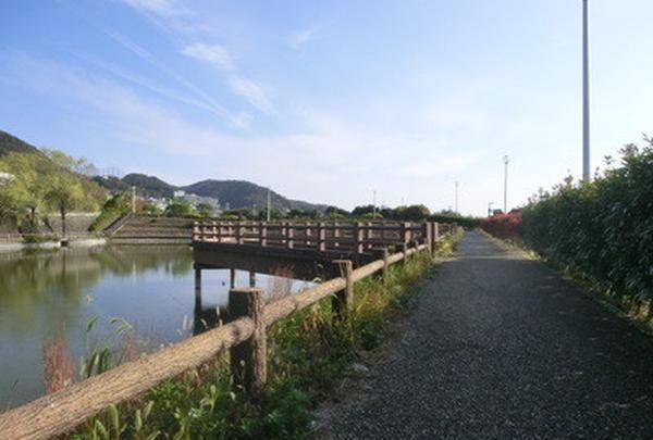 新稲三池の写真・動画_image_159856