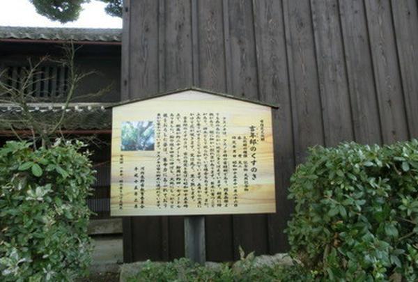 吉年邸のクスノキの写真・動画_image_179625