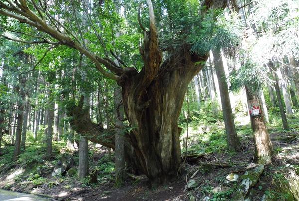 21世紀の森の写真・動画_image_188417
