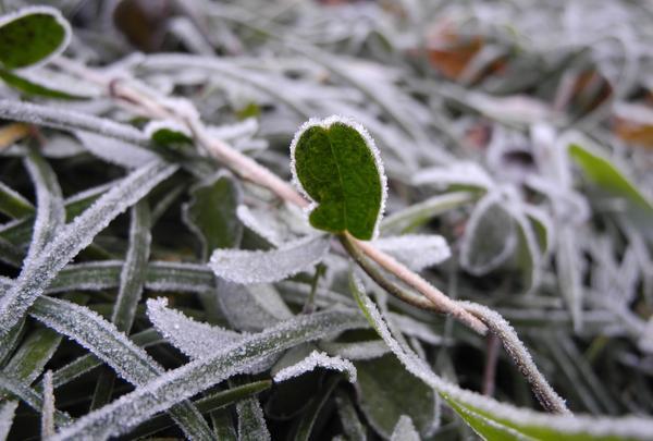 早朝の三千院は寒いのです