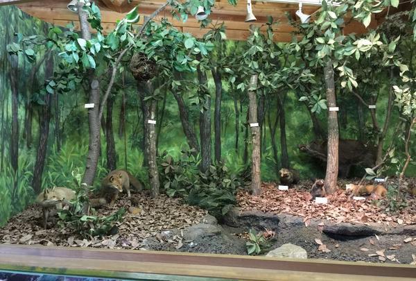 森のカルチャーセンターの写真・動画_image_30915