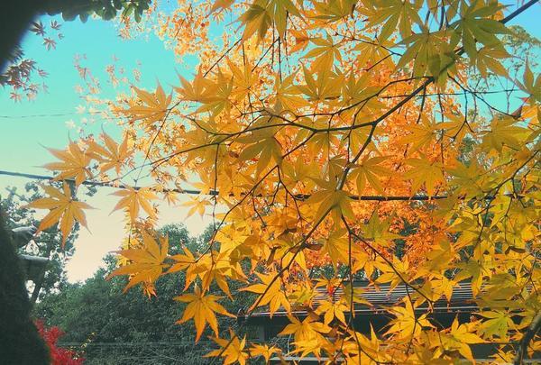 蓮華寺の写真・動画_image_241247