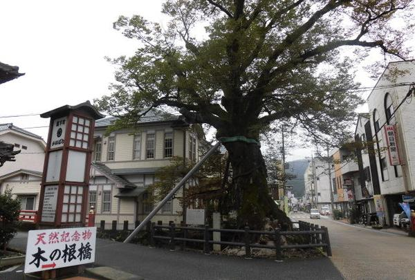 大ケヤキ(木の根橋)