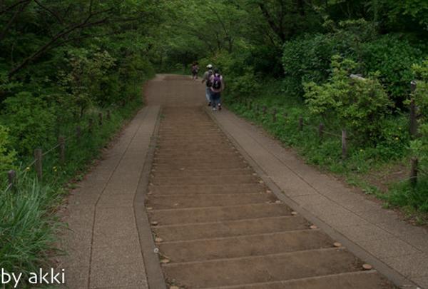 権現山〜弘法山の写真・動画_image_135332