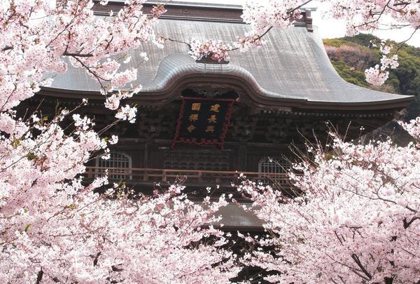 桜がきれいな時期でした