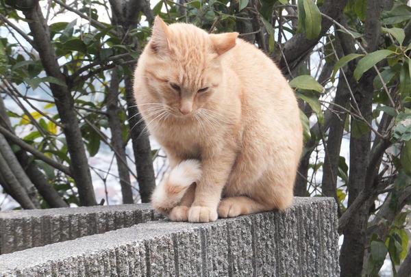 猫の集まる公園の近くにて。