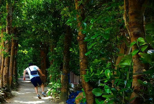 備瀬のフクギ並木の写真・動画_image_127783