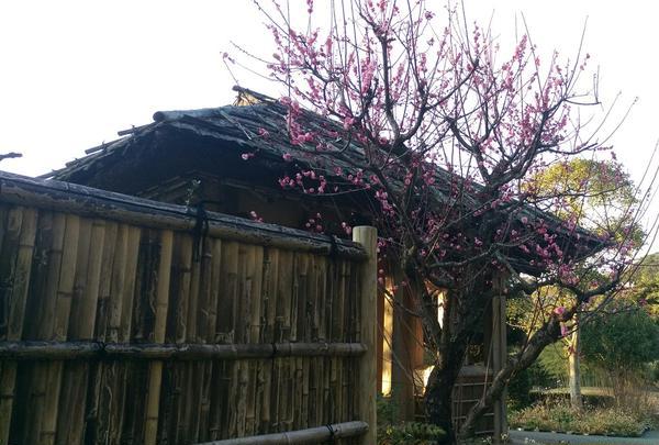 竹林園の写真・動画_image_162629