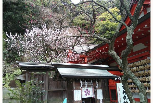 荏柄天神社の写真・動画_image_183187