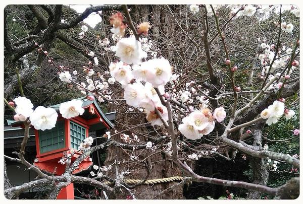 荏柄天神社の写真・動画_image_183188