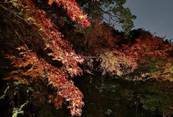 真っ赤な紅葉🍁